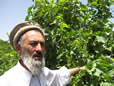 Afghan Raisin Farmer